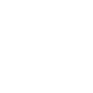 Große weiße Rose