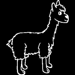 Lama weiss
