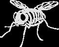 Motif Squelette de mouche