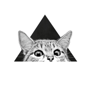 Cat in a Triangle