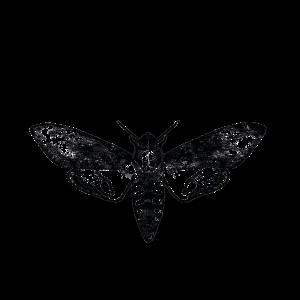 Motte Dreieck Insekt Falter