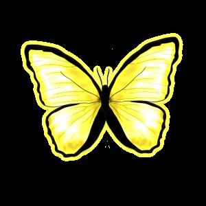 Schmetterling Gelb Zitrusfalter