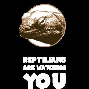 Reptilien beobachten dich