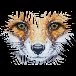 Kleiner Fuchs im Busch | Yolo-Artwork