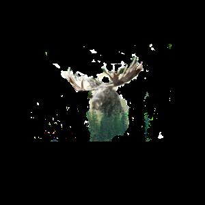 Elch im Wald