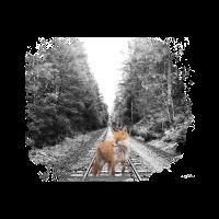 proud fox