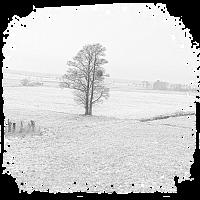 Baum vertäumt