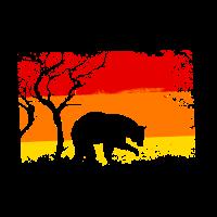 Baer Bear Baeren Wildniss Natur Wald Forest Wildne