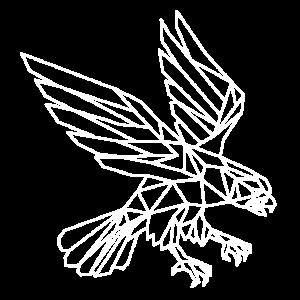 Adler der sich im Sturzflug befindet!