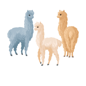 Ready for the Alpacalypse Funny Alpaca