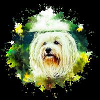 gxp haariger havaneser hund wasserfarbe spritzer