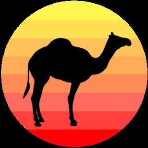 Kamel Dromedar Wüste Sahara