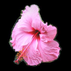 Pinke verwaschene Blume