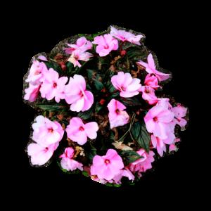 Verwaschene Rosa Blumen