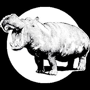 Nilpferd Hipo Wildnis brüllen Flusspferd