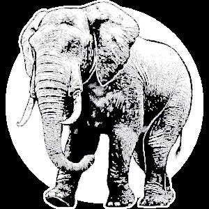 Elefant Afrika Savanne Dickhäuter