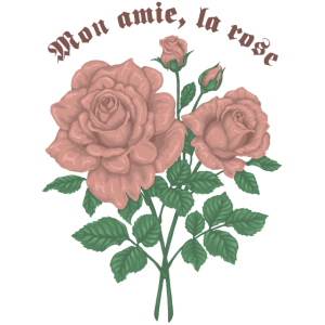 Meine Freundin rosa Rose