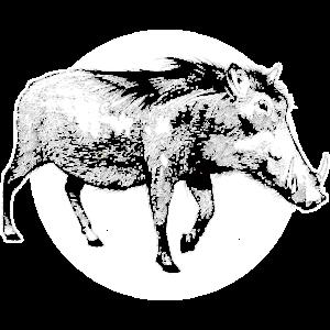 Wildschwein Waldtier Wildnis Sau