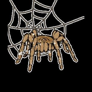 Spinne Gefahr - Spinnennetz