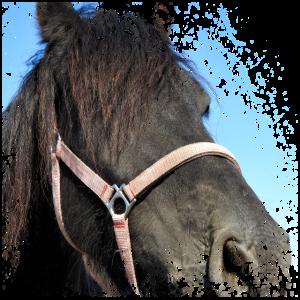 Pferd satteln und in die Natur hinaus reiten