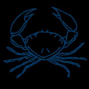 Ozean Krabbe