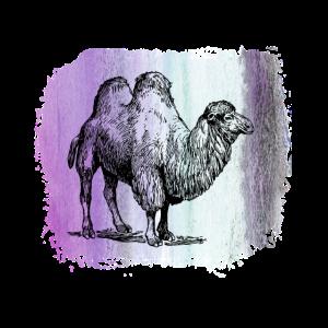 Kamel Camel Dromedar Wüste camel