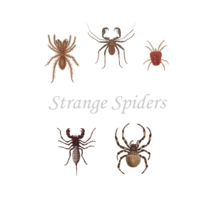 Librarian Halloween Shirt With Historic Spiders
