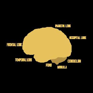Das schöne menschliche Gehirn Anatomie Geschenk