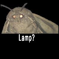 Moth Lamp Meme