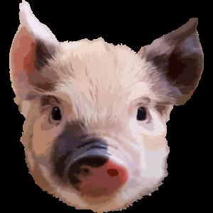 Schwein Geschenk
