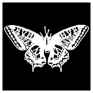 Schmetterling Insekt Mikroskop Tier Sommer Tattoo