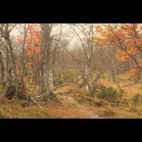 Lapplands Herbst