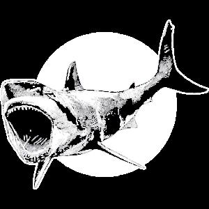 Hai Raubfisch des Ozeans