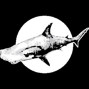 Hammerhai Hai Fischflosse schwimmen Ozean Jäger