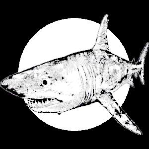 Hai auf Beutefang Kreis