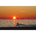 Yoga Held im Sonnenuntergang am Meer mit Vögeln