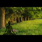 Yogi meditiert am Wald-Relax Ort der Meditation