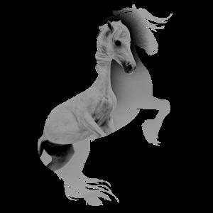 Pferd auf Hinterbeinen