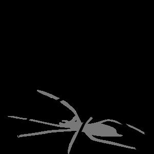 spinne spider