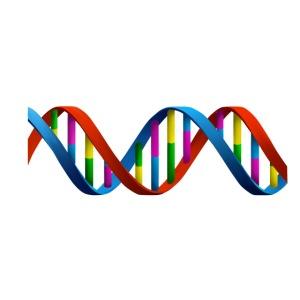 DNA Erbgut Gene