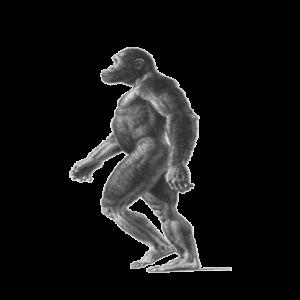 aurtralopithecus