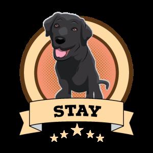 Hund Hündchen Labrador