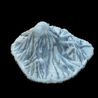 Eisberg der Extraklasse