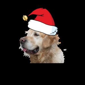 Hund mit Muetze Weihnachten Geschenk Golden Retrie