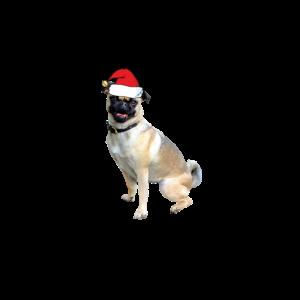Hund mit Muetze Weihnachten Geschenk Bulldoge