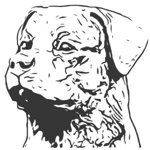 Rottweiler Portrait Grafik schwarz