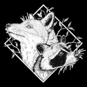 The fox + the raccoon