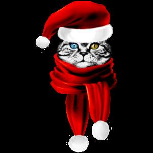 Weihnachten Katze Santa Klaus Lustige Miezekatze