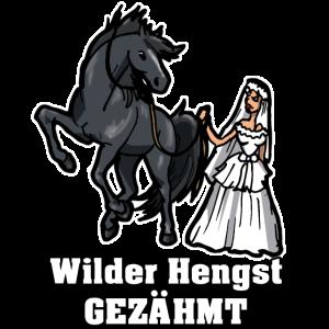 Wilder Hengst Gezähmt Geschenk Junggesellen Pferd