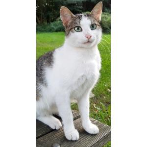 whitecat2